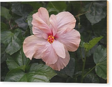 Wood Print featuring the photograph Just Blossoming Hibiscus by Craig Wood
