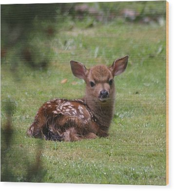 Just Born Bambi Wood Print by Kym Backland
