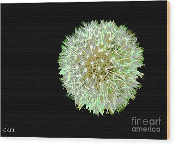 Just Dandy Wood Print by Cindy Manero