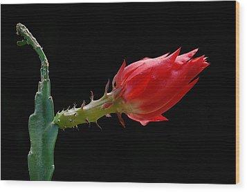 Just Flower Iv Wood Print