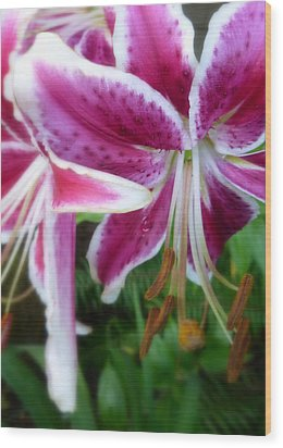 Wood Print featuring the photograph Just Hangin' Around Tiger Lilies by Cindy Wright