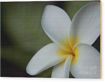 Kaena Mana I Ka Lani Kaulani Na Pua Plumeria Hawaii Wood Print by Sharon Mau