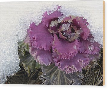 Kale Plant In Snow Wood Print by Sandi OReilly
