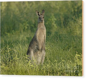 Kangaroo Female Wood Print by Bob Christopher