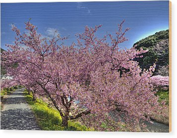Wood Print featuring the photograph Kawazu Sakura-1 by Tad Kanazaki