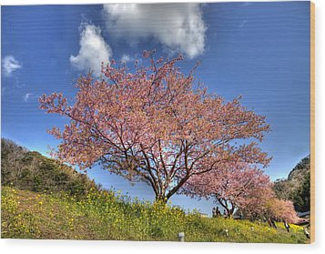 Wood Print featuring the photograph Kawazu Sakura-ii by Tad Kanazaki