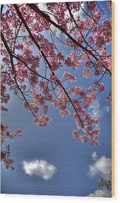 Wood Print featuring the photograph Kawazu Sakura-iii by Tad Kanazaki