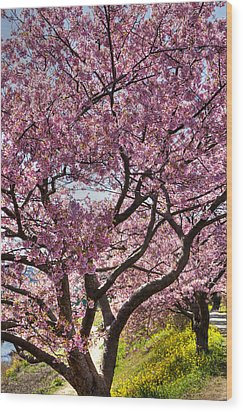 Wood Print featuring the photograph Kawazu Sakura  by Tad Kanazaki