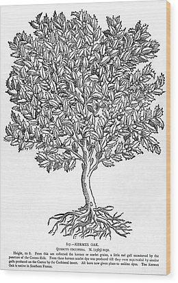 Kermes Oak Tree Wood Print by Granger