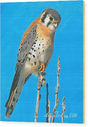 Wood Print featuring the drawing Kestrel by Ana Tirolese