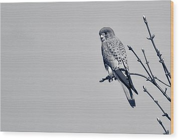 Wood Print featuring the photograph Kestrel by Justin Albrecht