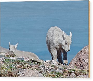 Kids On The Tundra Wood Print by Stephen  Johnson
