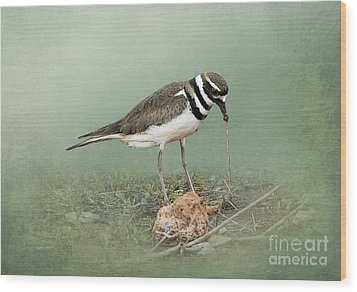 Killdeer And Worm Wood Print by Betty LaRue