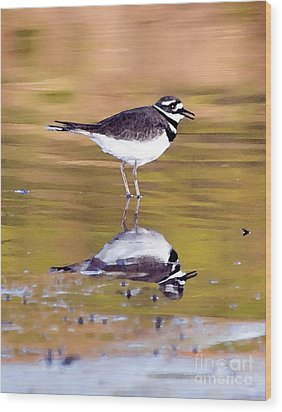 Killdeer Reflection Wood Print by Betty LaRue