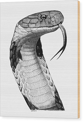 King Cobra Wood Print
