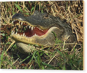 Wood Print featuring the photograph King Of The Swamp by Myrna Bradshaw