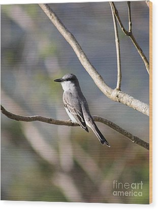 Kingbird Wood Print by The Art of Alice Terrill