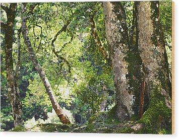 Kingdom Of The Trees. Peradeniya Botanical Garden. Sri Lanka Wood Print by Jenny Rainbow