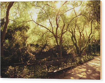 Kissed By The Sun - Central Park - New York City Wood Print by Vivienne Gucwa