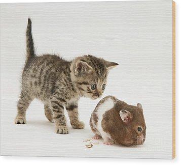 Kitten And Hamster Wood Print by Jane Burton
