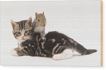 Kitten And Squirrel Wood Print by Jane Burton