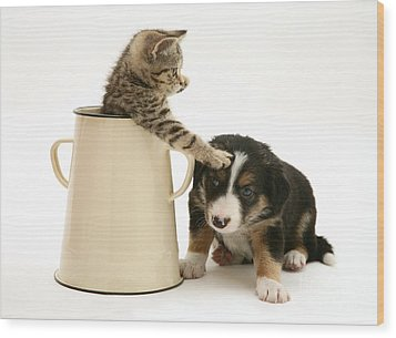 Kitten In Pot With Pup Wood Print by Jane Burton