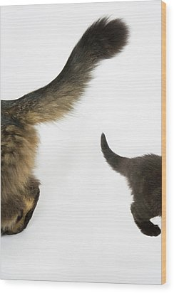 Kitten Looking Up At Mothers Tale. Wood Print by Nicola Tree