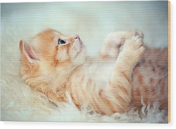 Kitten Lying On Its Back Wood Print by Susan.k.