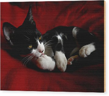 Kitten On Red Take Two Wood Print by Maggy Marsh
