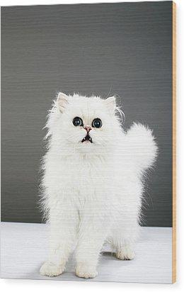 Kitten Portrait Wood Print by Martin Poole