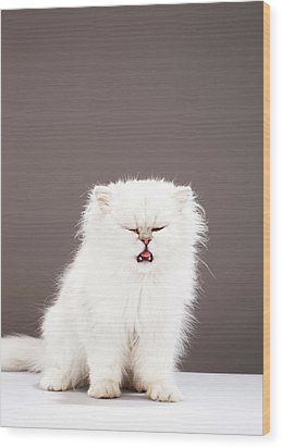 Kitten With Eyes Closed Wood Print by Martin Poole