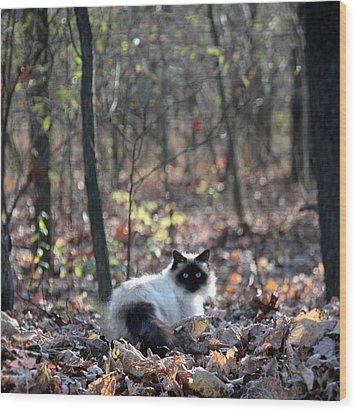 Kitty And Bokeh Wood Print by Penny Hunt