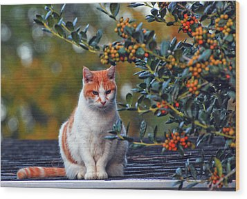 Wood Print featuring the photograph Kitty On The Roof by Margaret Palmer
