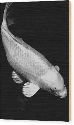 Koi In Monochrome Wood Print by Don Mann