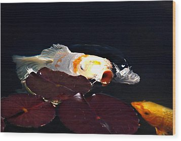 Koi In The Lillies Wood Print by Don Mann