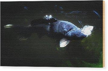Koi Into The Light Wood Print by Don Mann