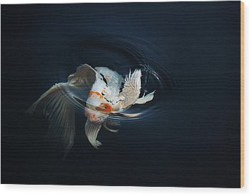 Koi Rising In The Moonlight Wood Print by Don Mann