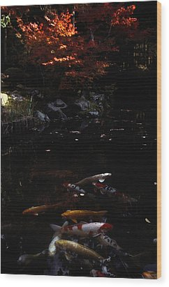 Koi Swim In A Pool Located Wood Print by Sam Abell