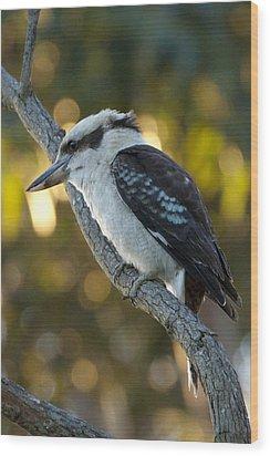Wood Print featuring the photograph Kookaburra by Serene Maisey