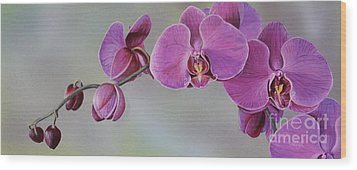Kristin's Orchid  Wood Print by Margit Sampogna