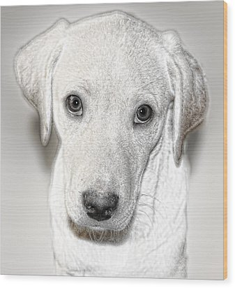 Lab Puppy Bw Sketch Wood Print by Linda Phelps