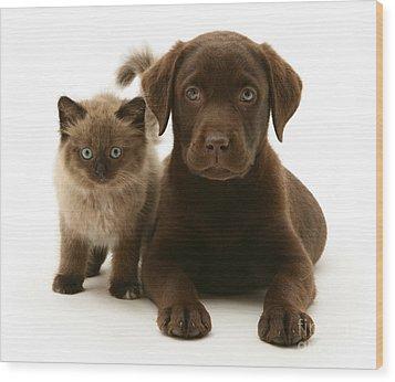 Labrador Pup And Birman-cross Kitten Wood Print by Jane Burton