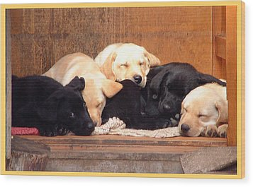 Labrador Puppies Sleeping Wood Print