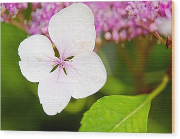 Wood Print featuring the photograph Lacecap Hydrangea Petal by MaryJane Armstrong