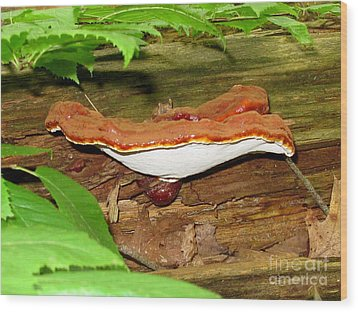 Lacquered Polypore Wood Print by Timothy Myles