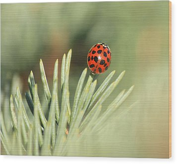 Wood Print featuring the photograph Lady Beetle On A Needle by Penny Meyers