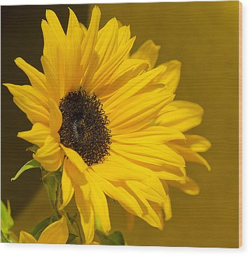 Wood Print featuring the photograph Lady Sunflower by MaryJane Armstrong