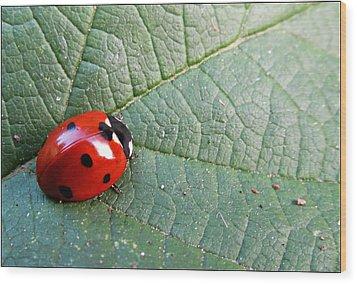 Ladybird Wood Print by Olivia Narius