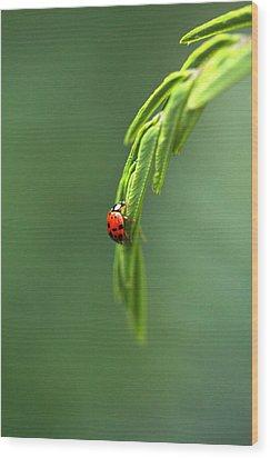 Ladybug 1 Wood Print by Pan Orsatti