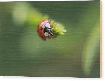 Ladybug 2 Wood Print by Pan Orsatti